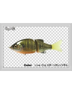 Chad S color Blue Gill