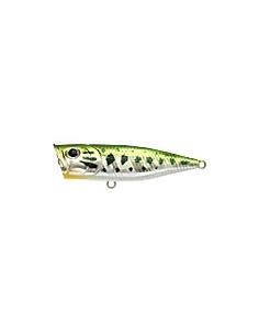 G-Splash color Aurora Bass